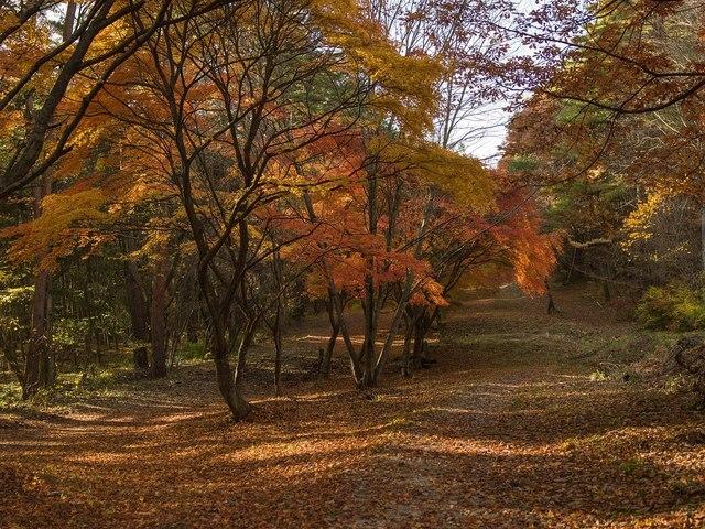 小淵沢2015-11c.jpg